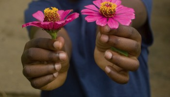 child holding two pink flowers outdoors